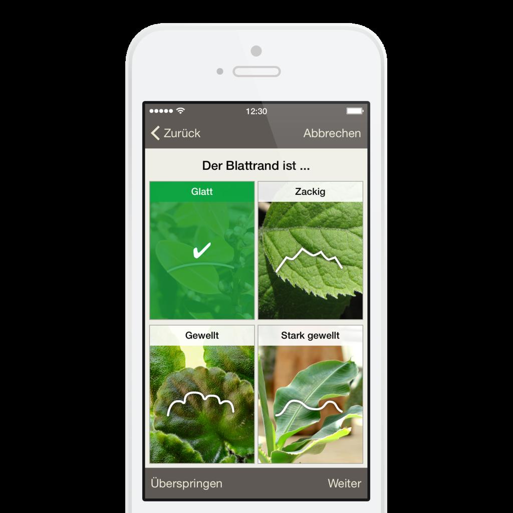 Koubachi Plant Sensor 2 App
